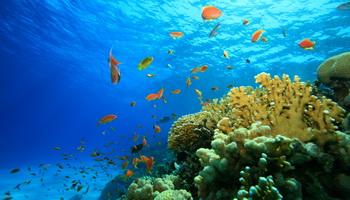 фото дно океана