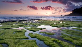 Саргассово море Загадки и тайны морей и океанов Саргассово море