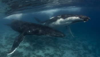 Как отпугивать китов