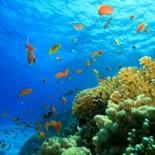 Тайны морского дна Индийского океана